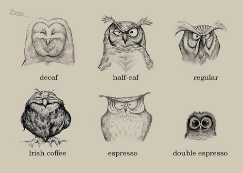 Coffee Owls 1