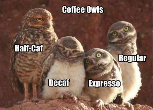 Coffee Owls 2
